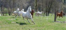 chevaux autour du centre équestre